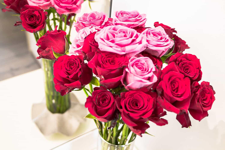 Květina růží jako součást předplatného květin a dárek na Valentýna