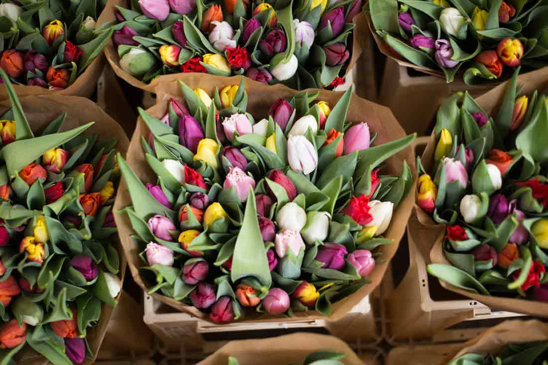 Řezané kytice tulipánů